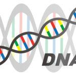 二重の遺伝子